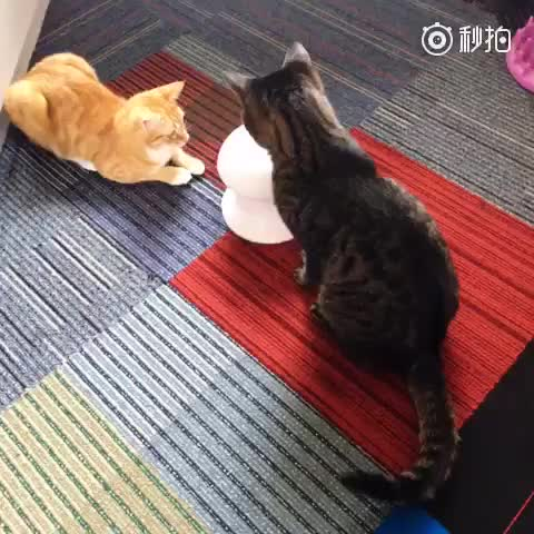 New design Laser Pointer Cat Toy Interactive Rotating Cat Laser Toys Electronic Pet Laser Toy