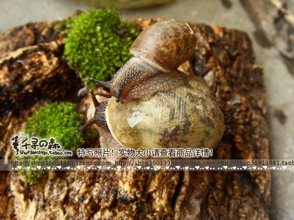 Children's day gifts cute mini garden/garden Snails crawling pets-in vivo cute little snail set
