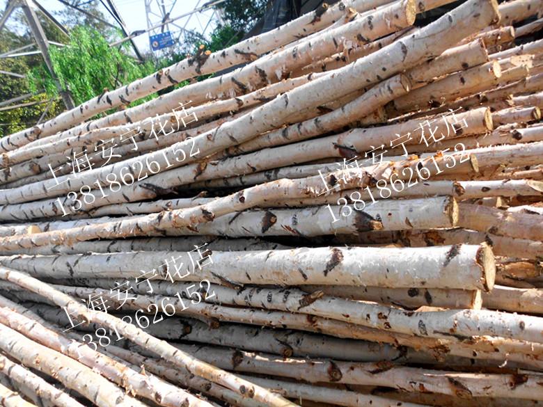 粗白桦树摆放树木瓷砖装饰树干酒店树桩素描平面设计原色橱窗图片