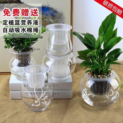 水培容器玻璃透明水培花瓶 玻璃花瓶水培植物花瓶 水养绿萝花盆
