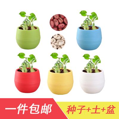 刻字爱情魔豆种子种植创意祝福儿童迷你植物带字小朋友桌面小盆栽