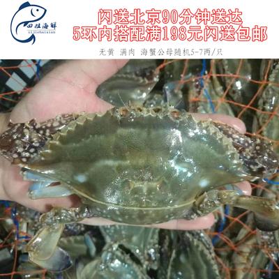 北京闪送现货鲜活满肉海蟹梭子蟹兰花蟹公母蟹无黄满肉蟹4-5两/只