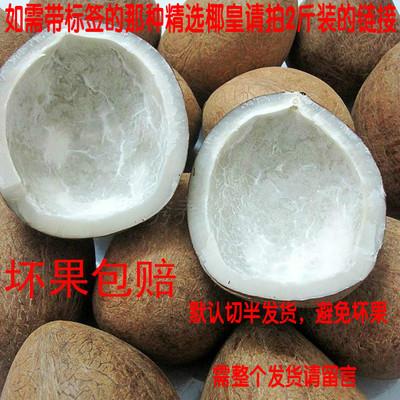 印度椰子皇 500g2-3只包邮海底椰子无壳海新鲜椰子皇海椰皇切开块