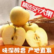 樱慕晴 东北大连黄元帅面新鲜苹果水果奶油富士现摘5斤非烟台