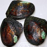蓝田珠宝直播专用开蚌链接 淡水多珠蚌补拍邮费