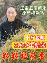 2020年新米正宗五常稻花香大米农家自产黑龙江东北大米5kg