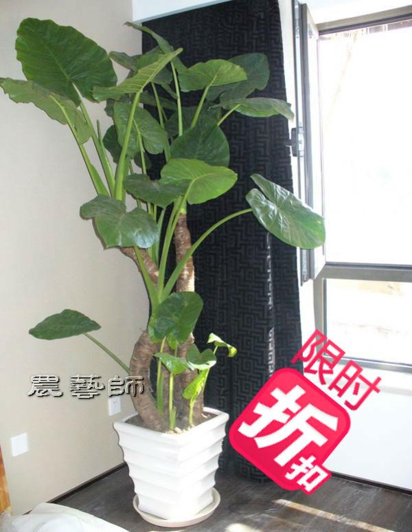 Горшечные растения Plants