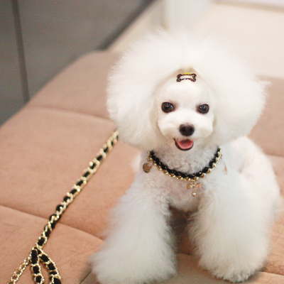 New Princess big metal chain pet dog collar chain leash dog suit small dog Teddy VIP