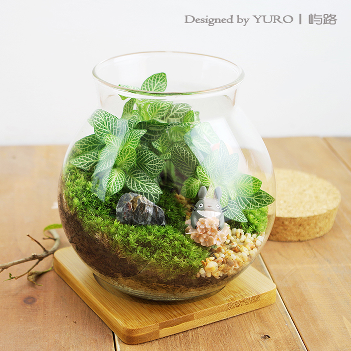 苔藓微景观植物生态瓶室内迷你绿植DIY摆件玻璃盆栽盆景顺丰包邮
