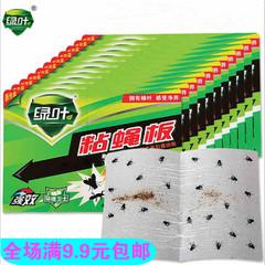 绿叶粘蝇板 苍蝇贴 灭蝇纸 苍蝇纸