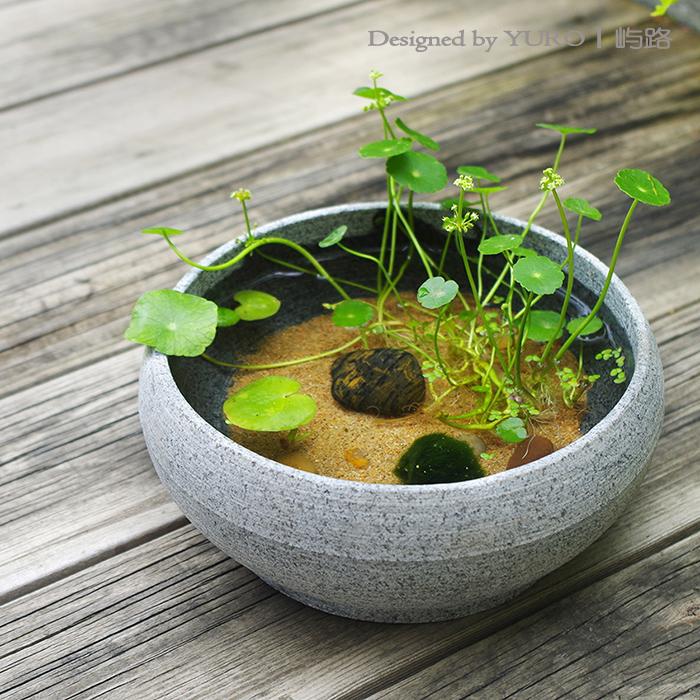 情人节礼物屿路创意绿藻海藻球生态瓶水培绿植苔藓微景观顺丰包邮