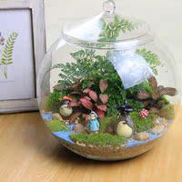 大号圆瓶苔藓微景观DIY盆栽龙猫生态瓶奇趣植物创意礼品大号直径