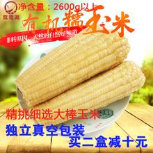 2017新有机大棒糯玉米非转基因东北粘苞米微甜新鲜黏嫩香真空包装