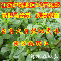 野生马齿苋菜新鲜马齿苋长寿菜五行菜种子健康纯野生蔬菜 价格:2.45