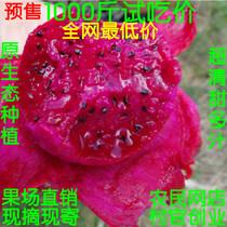 红肉火龙果新鲜红心火龙果 现摘新鲜水果 农家自种产地销500G 价格:5.90