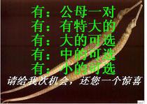 中药材海马蔺 干货 泡酒药材补肾壮阳早泄 自家捕晒 价格:5.50