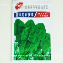18元包邮 阳台盆栽蔬菜种子【韩国超霸菠菜种子 25克】庭院种菜种 价格:3.80