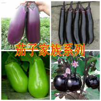 蔬菜种子/紫罐茄/长茄子/绿茄/圆茄子/红茄子种子 满28元包邮 价格:1.80