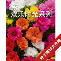 泛美大花马齿苋轻歌曼舞/欢乐时光 进口太阳花种子新手超好种盆栽 价格:2.20