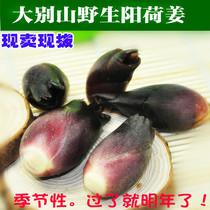 农家新鲜净菜 阳荷姜/野洋荷/茗荷/野洋姜/阳霍/�Z荷 现挖包新鲜 价格:6.40