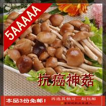 农家野生茶树菇 无根渣处理100%食用的短嫩小冒5A高山菇 高端礼品 价格:38.80