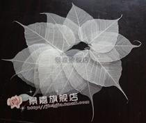 特价促销纯天然叶脉 菩提叶 叶脉书签 玉兰叶树叶标本 菩提叶标本 价格:0.90