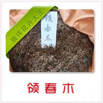 花卉种子★领春木种子★当年新采种子 云叶树 木桃 120元一斤 价格:120.00