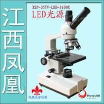 凤凰 学生 生物 光学 显微镜 正品XSP-35TV-1600倍/640倍专业型 价格:800.00
