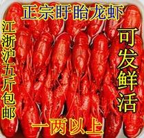 正宗 盱眙龙虾 小龙虾 十三香 独家秘制配方天然纯正一两以上一只 价格:98.00