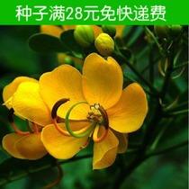 七里黄种子 生命力强花期长耐寒不限光照 阳台盆栽简单易种 50粒 价格:1.50
