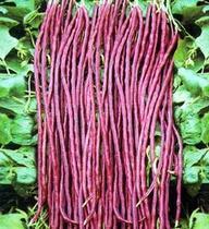 (天天乐滋网)新鲜蔬菜 豇豆 长豇豆 紫红色豇豆 杭州市区配送 价格:6.80