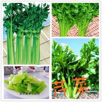 家庭阳台种菜蔬菜种子芹菜种子药芹促销种子满30元包邮 每包50粒 价格:1.90