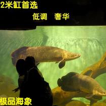 【小鱼儿】热带鱼巨骨舌鱼海象鱼野生海象大型缸鱼包活 价格:580.00