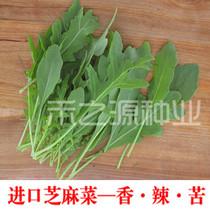 进口芝麻菜种子 意大利进口 多次摘 芝麻香菜《每日农经》芝麻味 价格:6.40