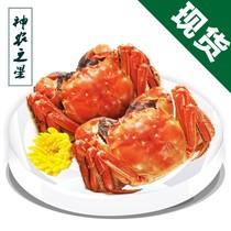 现货 阳澄湖大闸蟹 团购 全母蟹2.8-3.0两 鲜活螃蟹8只 选配礼盒 价格:275.00