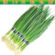 蔬菜种子家庭盆栽 四季小葱 香葱种子 四季播 阳台 易种花草卉籽 价格:1.00