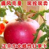 现挖现卖 抗痛风东北雌性红萝卜 东北雌性大红萝卜 2.5元/个 价格:2.50