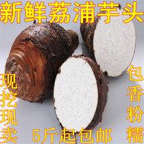 桂林正宗新鲜 荔浦芋头 香芋 槟榔芋 无公害 包香粉糯 5斤包邮 价格:9.80