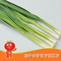 【东升农场】无公害青蒜_青菜配料蒜苗 新鲜蔬菜 广州配送(150g 价格:4.00
