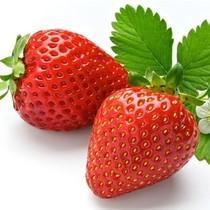 四季盆栽草莓种子 盆栽白色/红色草莓种子 价格:2.50