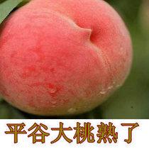 北京平谷大桃水蜜桃桃子久保桃 新鲜有机水果礼品 寿桃甜 价格:98.00