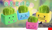 小花迷魔羯座狮子座射手座草娃娃生态E园创意迷你植物 全国包邮 价格:15.00
