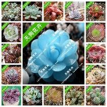 盆栽植物进口迷你多肉植物种子 景天枝干番杏种子 生石花种子套餐 价格:0.10