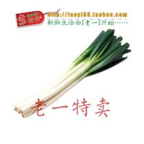 老一特卖 大葱 肉葱 新鲜肉葱 香料  500克5元 价格:5.00