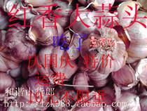 和谐山货郎 铜仁土特产 有机红蒜头  新鲜蒜苗 新鲜红大蒜 价格:12.50