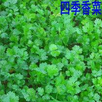 种子满28包邮-种菜用品店 盆栽蔬菜种子-四季香菜15克 价格:2.50