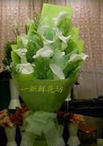 11朵白色马蹄莲花束生日鲜花速递上海市长宁区天华山仙霞路鲜花店 价格:133.00
