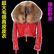 吉祥豚 2013新款真皮皮衣 超大毛领机车绵羊皮外套加棉 女 特价 价格:1488.00