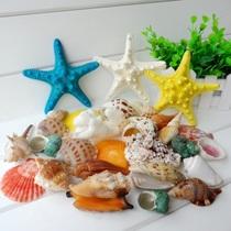 海之忆 天然海螺 贝壳珊瑚套餐400g+送3个海星 婚庆展柜地台装饰 价格:30.00