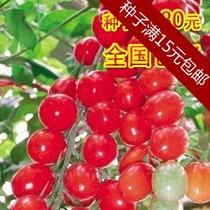 庭院阳台种植育苗花仙子种子樱桃番茄果实类蔬菜种子好看好吃 价格:2.25